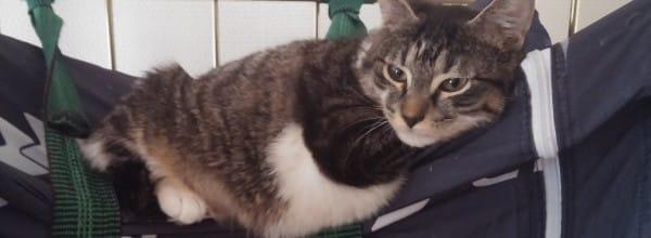 au chat qui roule hotel de verdun nevers centre