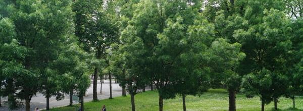 vue sur le parc roger salengro de l'hôtel de verdun nevers